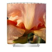 Irises Art Prints Orange Peach Iris Flower Giclee Baslee Troutman Shower Curtain