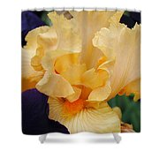 Irises Art Prints Peach Iris Flowers Artwork Floral Botanical Art Baslee Troutman Shower Curtain