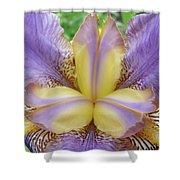 Irises Art Purple Yellow Iris Flowers Giclee Prints Baslee Troutman  Shower Curtain