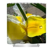 Irises Artwork Iris Flowers Art Prints Flower Rain Drops Floral Botanical Art Baslee Troutman Shower Curtain
