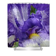 Irises Artwork Purple Iris Flowers Art Prints Canvas Baslee Troutman Shower Curtain