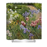 Irises At Bedfield Shower Curtain