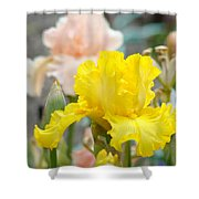 Irises Botanical Garden Yellow Iris Flowers Giclee Art Prints Baslee Troutman Shower Curtain