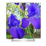 Irises Floral Garden Art Print Blue Purple Iris Flowers Baslee Troutman Shower Curtain