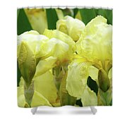 Irises Flower Garden Yellow Iris Baslee Troutman Shower Curtain