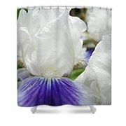 Irises Flowers Art Print Gifts White Purple Iris Flower Shower Curtain