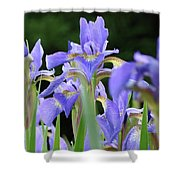 Irises Flowers Art Prints Blue Purple Iris Floral Baslee Troutman Shower Curtain