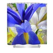Irises Flowers Artwork Blue Purple Iris Flowers 1 Botanical Floral Garden Baslee Troutman Shower Curtain