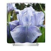 Irises Light Blue Artwork Iris Flowers Baslee Troutman Shower Curtain