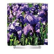 Irises Princess Royal Smith Shower Curtain