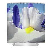 Irises White Iris Flowers 15 Purple Irises Art Prints Floral Artwork Shower Curtain