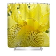 Irises Yellow Brown Iris Flowers Irises Art Prints Baslee Troutman Shower Curtain