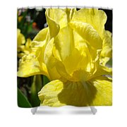 Irises Yellow Iris Flowers Floral Art Prints Botanical Garden Artwork Giclee Shower Curtain