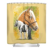 Irish Cob Shower Curtain
