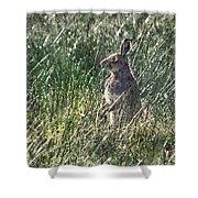 irish Hare Shower Curtain