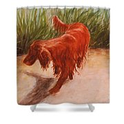 Irish Setter In The Grass Shower Curtain