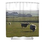 Irish Sheep Farm I Shower Curtain
