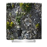 Irish Stone Flowers Shower Curtain