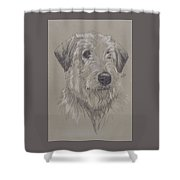 Irish Wolfhound Shower Curtain