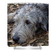 Irish Wolfhound Ivan Shower Curtain