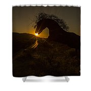 Iron Horse #2 Shower Curtain