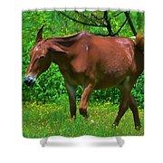 Irritated Horse Shower Curtain