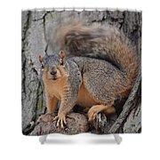 Irritated Squirrel Shower Curtain