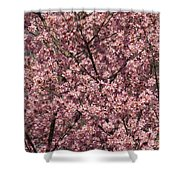 First Spring Blossom Shower Curtain