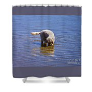 Is That Me ? Shower Curtain