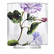 Isabella Sinclair - Pohue Shower Curtain