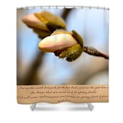 Isaiah 61  V 11 Shower Curtain