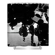 Island - View -  Black And White Shower Curtain