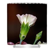 Isolated Flower  Shower Curtain