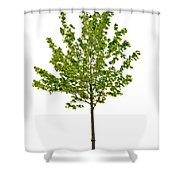 Isolated Young Maple Tree Shower Curtain by Elena Elisseeva