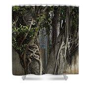 Israel, Tree Trunk Shower Curtain