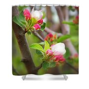 It Is Spring Time In The Annapolis Valley Shower Curtain