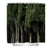 Italian Cypress Trees Line A Road Shower Curtain