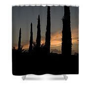 Italian Cypress Trees Silhouetted Shower Curtain