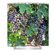 Italian Grapes Shower Curtain