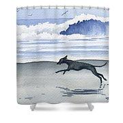 Italian Greyhound At The Beach Shower Curtain