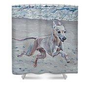 Italian Greyhound On The Beach Shower Curtain