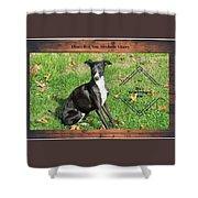 Italian Greyhound Wine Shower Curtain