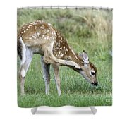 Itchy Fawn Shower Curtain