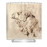itle Head of a Dromedary Shower Curtain