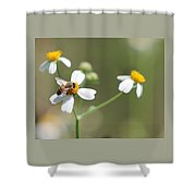 Its A Bee's World Shower Curtain