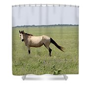It's A Horse Of  Course Shower Curtain