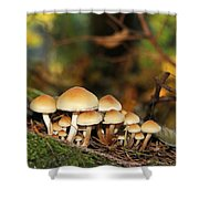 It's A Small World Mushrooms Shower Curtain by Jennie Marie Schell
