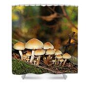 It's A Small World Mushrooms Shower Curtain