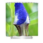 It's A Wrap - Iris Bud Shower Curtain