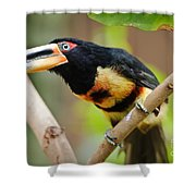 It's All About The Beak Shower Curtain